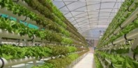 Aeroponics Agriculture and Horticulture